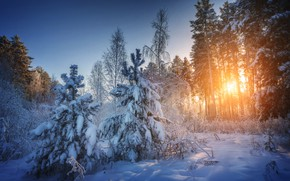 Picture winter, forest, snow, trees, landscape, sunset, nature, Siberia, Николай Шевченко