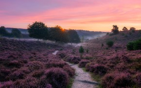 Picture field, fog, morning, Heather