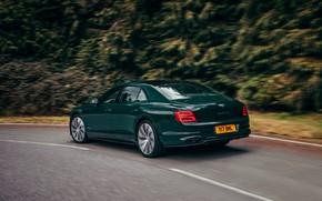 Picture forest, movement, Bentley, roadside, Flying Spur, 2020, V8, 2021, Flying Spur V8