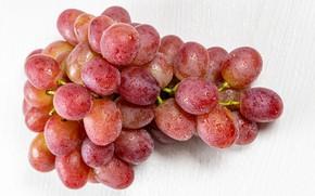 Picture drops, macro, berries, grapes, bunch