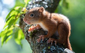 Picture tree, branch, protein, squirrel