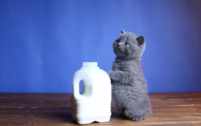 Picture baby, milk, canister, kitty, stand