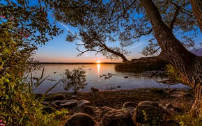 Picture the sky, trees, sunset, lake, duck