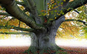 Picture Nature, Tree, Leaves, Branches, Trunk
