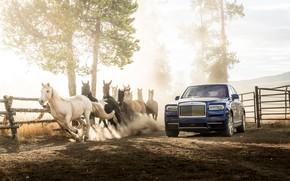 Picture rolls-royce, horse, rolls-Royce, cullinan, callinan