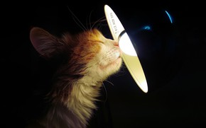 Picture cat, house, lamp