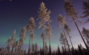 Picture winter, forest, the sky, stars, trees, night, nature, Northern lights, Finland, Lapland