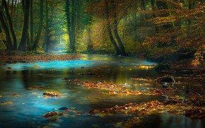 Picture forest, leaves, river