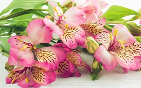 Picture flowers, bouquet, Alstroemeria, THE OFF