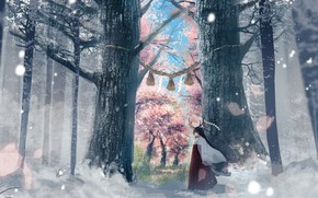 Picture forest, girl, trees