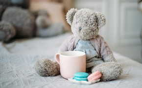 Picture comfort, tenderness, toys, macaroni, Teddy bear is, morning in bed