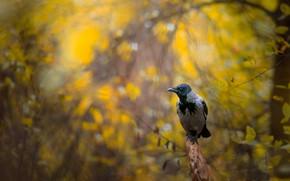 Picture autumn, forest, bird