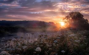 Picture The sun, Clouds, Fog, River, House, Light, Dawn, Rays, Grass, Dawn, Shine
