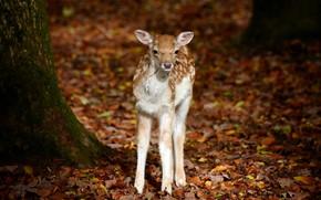 Picture Bambi, Schwarze Berge Wildlife Park, Animals