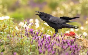 Picture flowers, bird, Raven, crow, mining