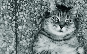 Picture road, cat, cat, look, face, pebbles, stones, grey, lies, black and white, striped, monochrome, collapsed