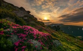 Picture sunset, flowers, nature, Switzerland, Daniel Maier
