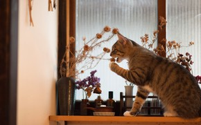 Picture cat, cat, the game, bouquet, window, sill