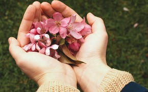 Picture flowers, hands, Apple