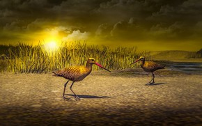 Picture grass, the sun, clouds, light, sunset, birds, rendering, shore, two, pair, pond, two birds