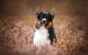 Picture look, flowers, pose, background, portrait, dog, sitting, bokeh, Heather