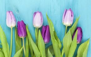 Picture flowers, purple, tulips, wood, flowers, beautiful, blue background, tulips, spring, purple