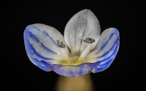 Picture macro, black background, flower