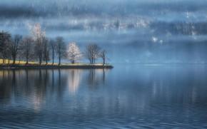 Picture forest, water, trees, lake, Slovenia, Slovenia, Lake Bohinj, Bohinj lake