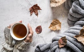 Picture autumn, leaves, heat, tea, hands, autumn, knitting, knitted thing