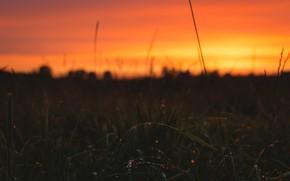 Picture Nature, Sunrise, Plant, Morning, Dawn, Plants, Nature, Horizon, Sunrise, Dawn, Golden, Morning, Wet, Flora, Plants, …