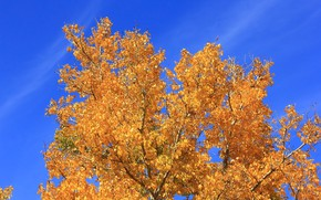 Picture autumn, the sky, leaves, tree