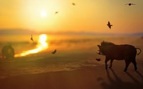 Picture sea, beach, the sun, light, landscape, sunset, birds, nature, shore, surf, fangs, pig, boar, hog, …