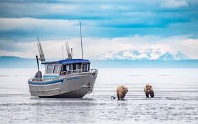 Picture winter, animals, snow, landscape, nature, lake, predators, Alaska, pair, bears, grizzly, Clark, lolka