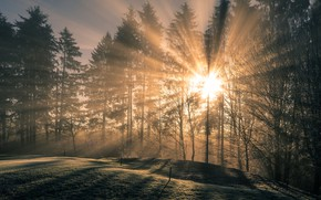 Picture forest, the sun, rays, light, trees, branches, nature, fog, trunks, glade, morning, ate, shadows, lawn, …