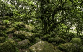 Picture roots, stones, tree, moss, crown