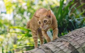 Picture cat, grass, cat, look, face, leaves, pose, kitty, tree, red, log, bark, bokeh, teen