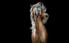 Picture background, horse, black background