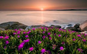 Picture sea, summer, the sky, the sun, sunset, flowers, stones, dawn, shore, horizon, pink, Spain