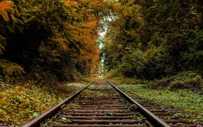 Picture autumn, rails, railroad