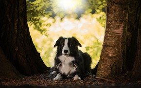 Picture trees, nature, animal, trunks, dog, dog