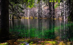 Picture forest, water, the sun, trees, nature, moss