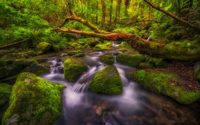 Picture forest, landscape, nature, stream, stones, waterfall