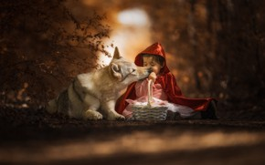 Wallpaper forest, face, light, red, pose, the dark background, grey, mood, basket, wolf, child, the situation, ...