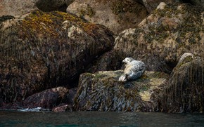 Picture sea, algae, the dark background, stones, rocks, seal