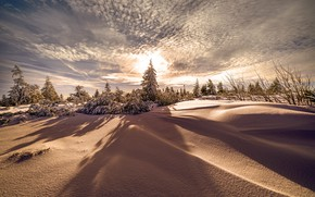 Picture winter, forest, the sky, the sun, clouds, light, snow, branches, nature, lights, dawn, spruce, dal, …