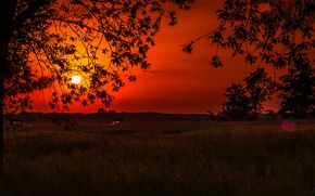 Picture the sun, sunset, glow