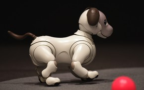 Picture face, the dark background, toy, the ball, mechanism, robot, dog, puppy, profile, side view, dog, …