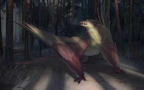 Picture forest, dragon, wings
