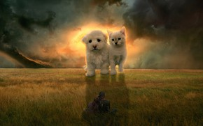 Picture field, cat, the sky, clouds, rendering, kitty, fantasy, girls, collage, dog, pair, puppy, giants, photoart