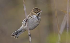 Picture nature, bird, a blade of grass, DUELL ©